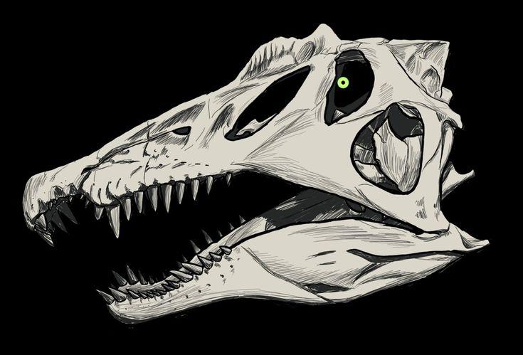 Spinosaurus Skull Drawing