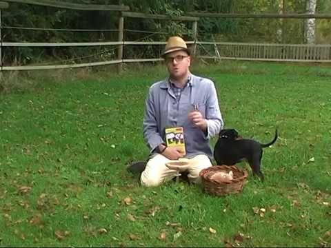 Pilze suchen - ob man den wohl essen kann? - Comedy aus Kattenvenne mit ...