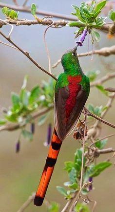 Un pájaro en Argentina