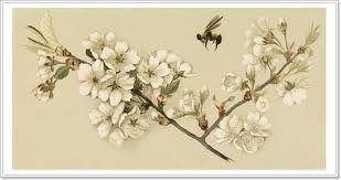 Картинки по запросу птицы парами картины