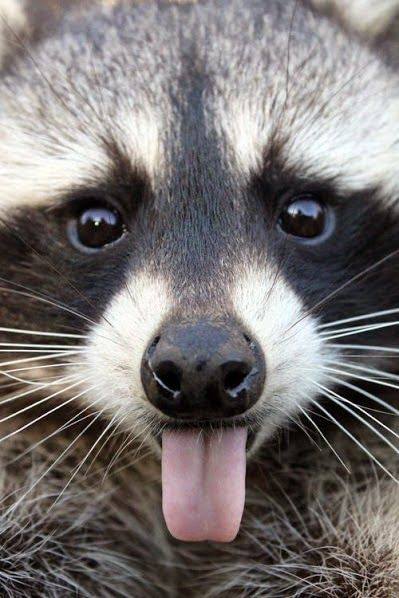 ஜ۩۞۩ஜ Azulestrellla ஜ۩۞۩ஜ: (◕‿◕)Animales graciosos y bonitos (◕‿◕)
