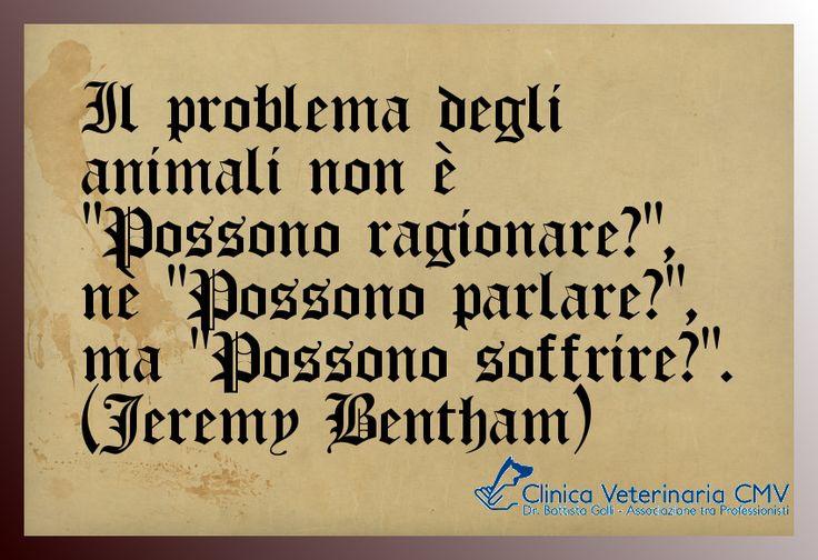 """Il problema degli animali non è """"Possono ragionare?"""", nè """"Possono parlare?"""", ma """"Possono soffrire?"""" (Jeremy Bentham) http://www.clinicaveterinariacmv.it/"""