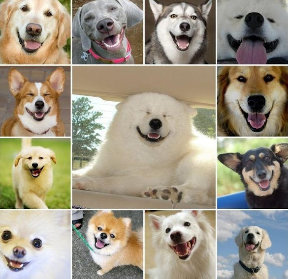 all smiles...: Happy Faces, Dogs Smile, Animal Lovers, Doggies Smile, Smile Dogs, Dental Care, Happy Dogs, Furry Friends, Smile Faces