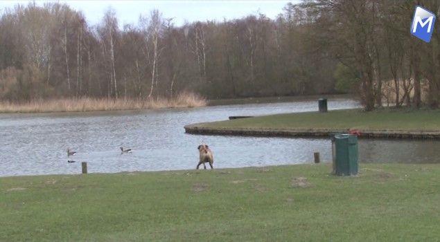 Hondenbezitters kunnen beter het Streekbos mijden (video)