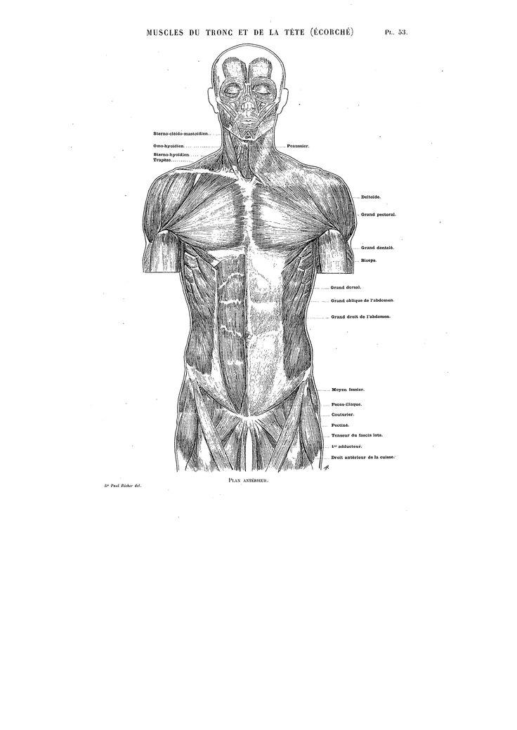 29 besten Paul Richer Bilder auf Pinterest | Anatomieverweis, Ark ...