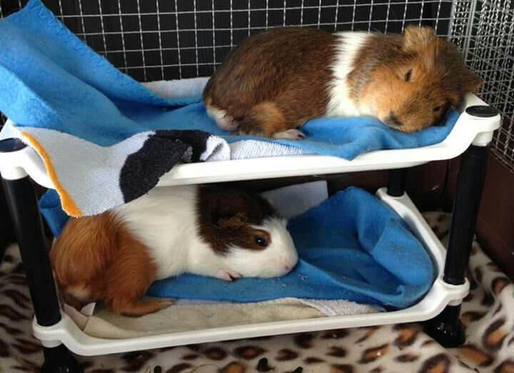 Definitely need to make the boys some bunk beds