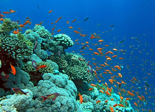 a healthy reef with a varity of life: Red Sea, Coral Reef, Buckets Lists, Blue Sky, Vietnam Travel, The Ocean, Redsea, Scubas Diving, Underwater World