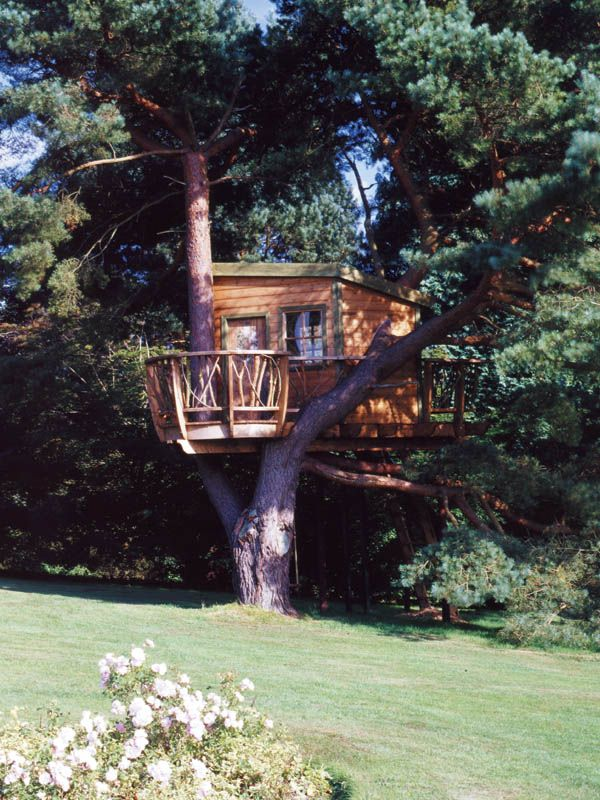 Future Tree Houses 37 best tree house, i could live there images on pinterest