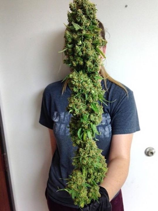Find out the best cannabis seeds to use for huge yields. Learn the latest marijuana growing techniques from the world's leading horticulturists. Get certified as a cannabis extraction expert. Want to learn all about dabs, dabbing, hash oil, and wax? Get certified as a cannabis extraction specialist.  Best of all, when you are done, make free money as a CTU cannabis affiliate. Enroll at the top marijuana college today! www.theCTU.com