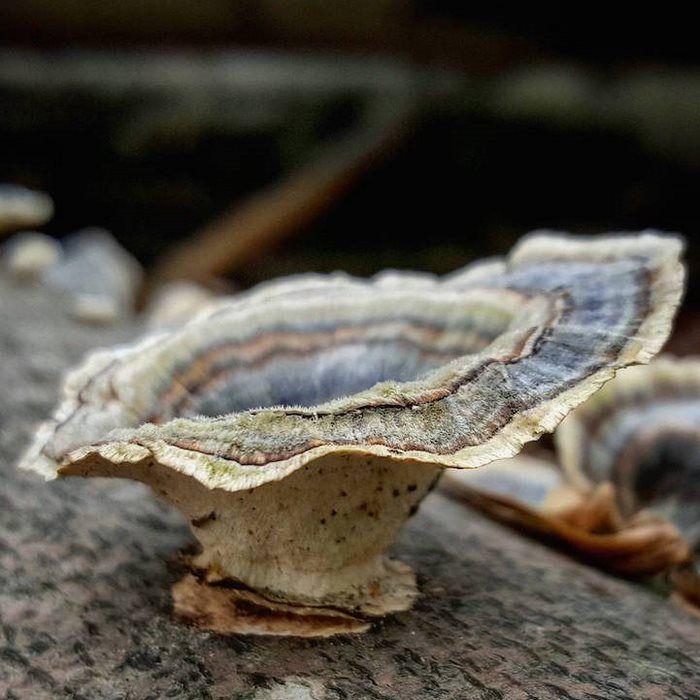 Η εντυπωσιακή ομορφιά των μανιταριών σε 20 μαγικές φωτογραφίες