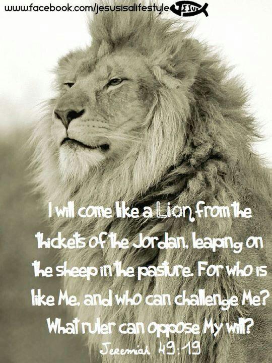 215 Best Scripture With Lions Images On Pinterest Lion Of Judah