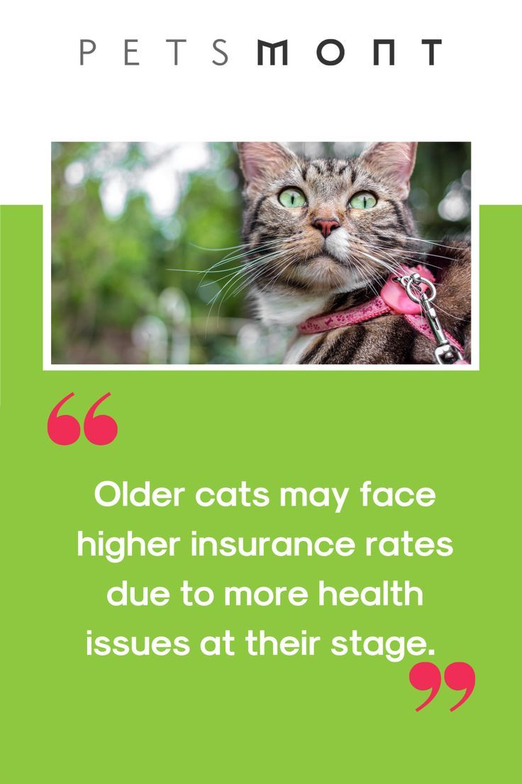 What Is The Truth Behind Pet Insurance For Cats Petsmont In 2020 Pet Insurance Pets Cats Pets