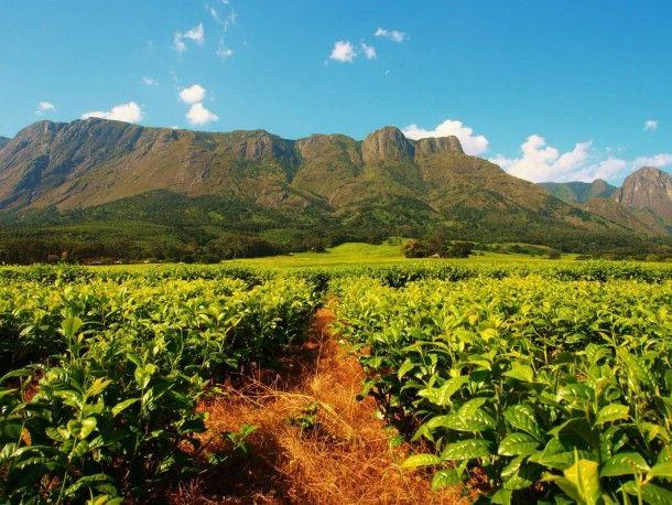 Mount Mulanje Malawi. BelAfrique your personal travel planner - www.BelAfrique.com