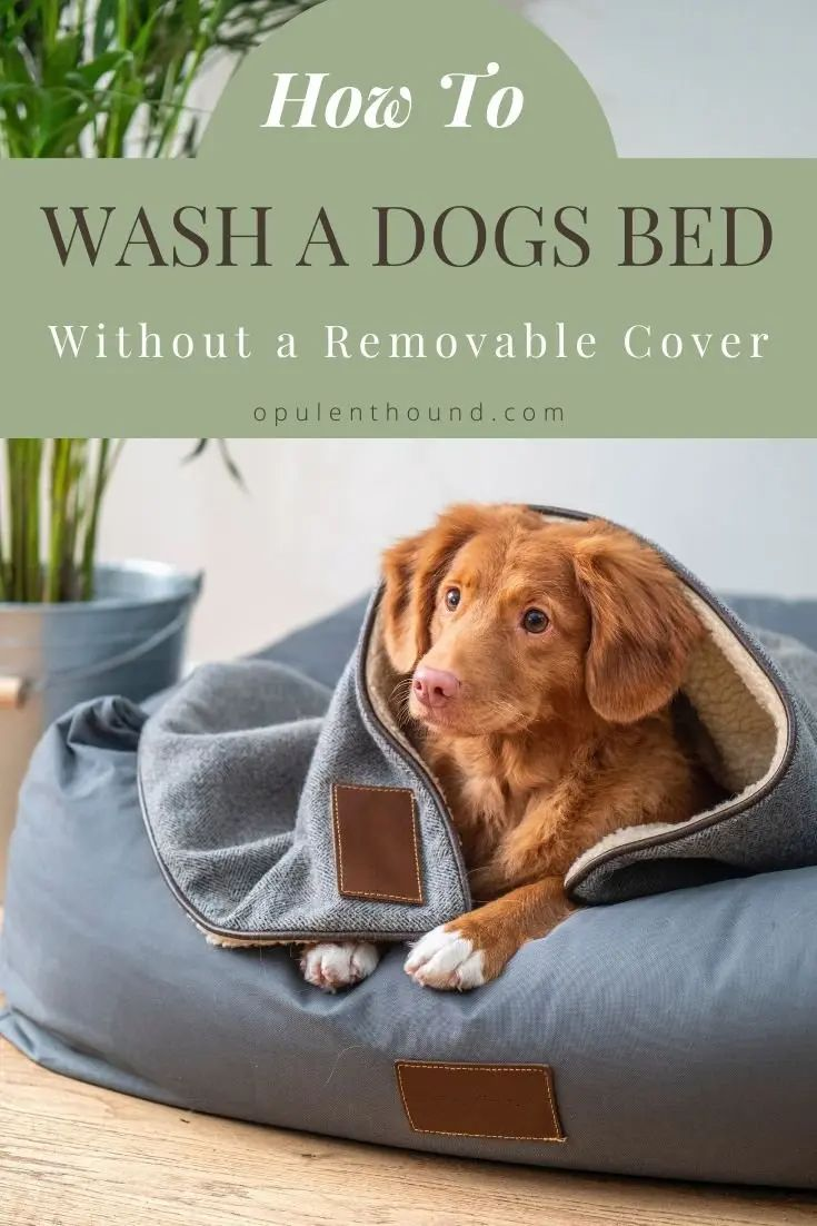 How to Wash a Dog's Bed Without a Removable Cover in 2020