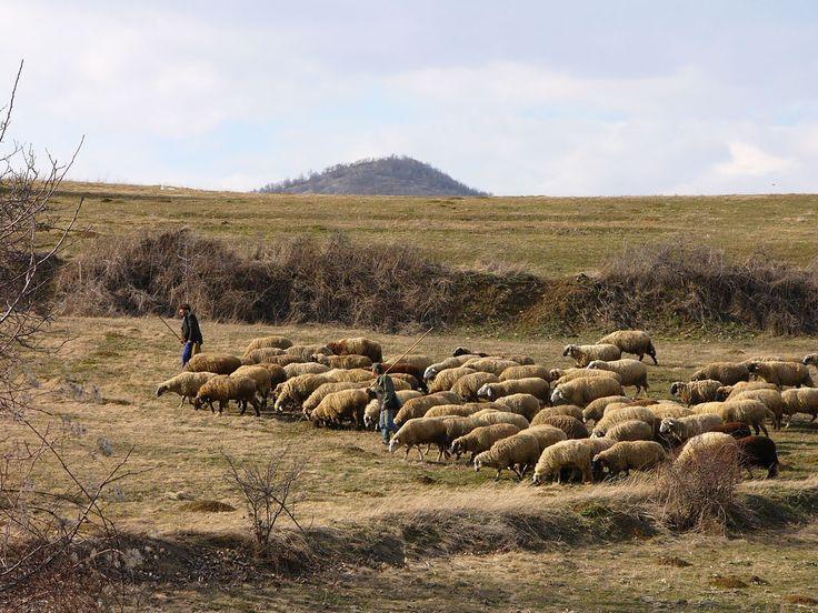 http://owczyswiat.pl/wypas-owiec/ #wypasowiec Wypas owiec to folklor dla ceprów. hodowcy przeprowadzają zatem turystyczny wypas owiec, aby goście mogli oglądać ich zaangażowanie. Turyści mogą nie tylko podziwiać specyficzną prace juhasów, ale także kupić owcze towary. Tego rodzaju wypas owiec to na Podhalu tradycja. goście chętnie przyjeżdżają w góry i zostawiają u lokalnych bardzo dużo dutków.