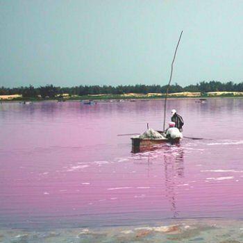 Situé à 30 km au nord-est de la capitale Dakar, au Sénégal, le lac Rose, appelé officiellement lac Retba, est l'un des sites les plus visités de la presqu'île du Cap-Vert. Grand lagon salé d'une superficie de 3 km², sa couleur rose est due à une cyanobactérie qui fabrique un pigment rouge pour résister à la concentration de sel.