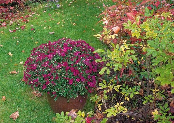 663 best jardins potagers images on pinterest gardening plants and beans. Black Bedroom Furniture Sets. Home Design Ideas