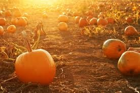 Must go to a pumpkin patch this fall!