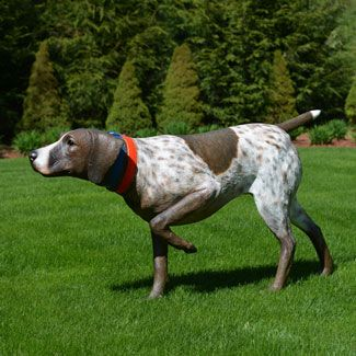 19 best images about German ShortHaired Pointer ❤❤ on Pinterest ...