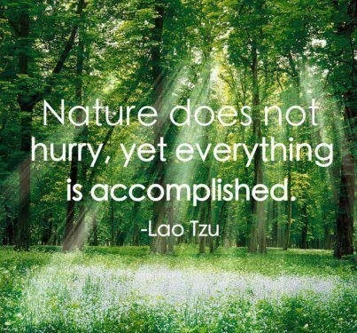 """Nature does not hurry yet everything is accomplished"" #quotes"