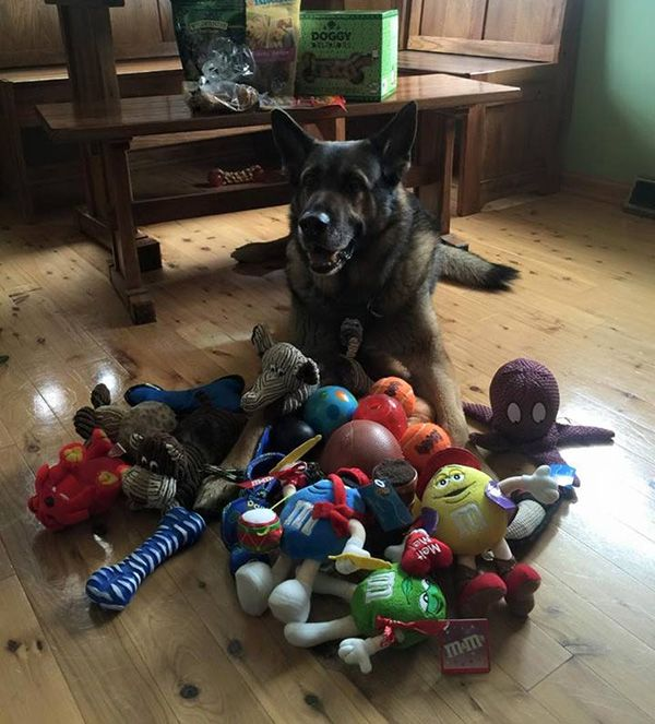 This Police dog is given retirement presents from the community on his last day on the job. Perfect!