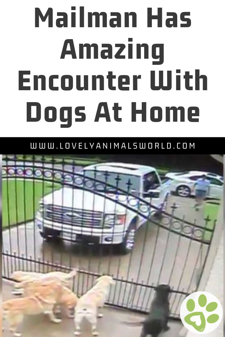 Mailman Has Amazing Encounter With Dogs At Home