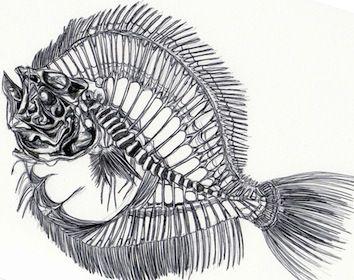 Fish Skeleton - Kate Morgan - Artist & Illustrator