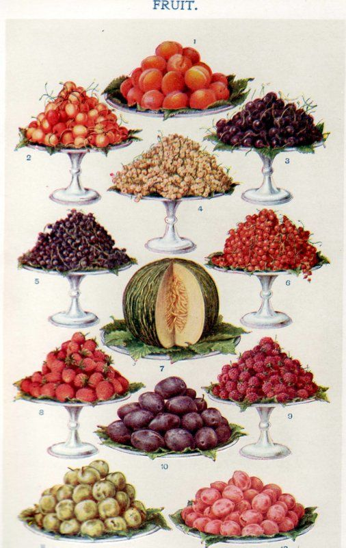 Fruits - from Mrs Beeton's Book of Household Management (1861)...love this!