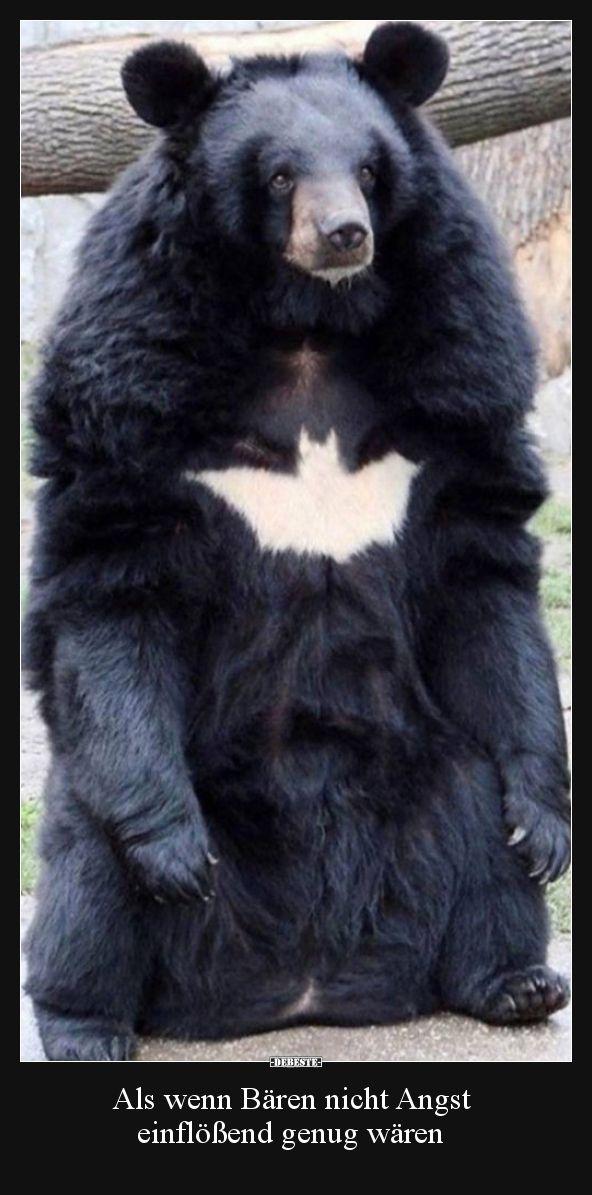 Als wenn Bären nicht Angst einflößend genug wären.. | Lustige