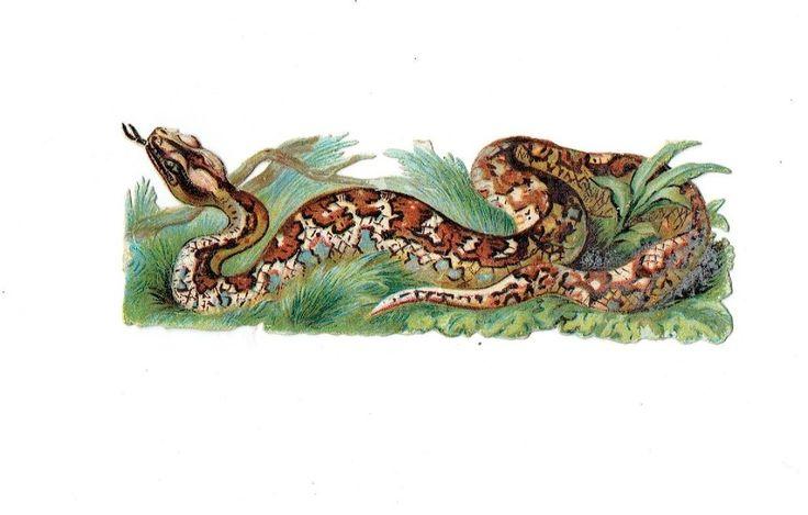 Un chromo - Découpis  - Serpent  - 12 cm x 4 cm fr.picclick.com