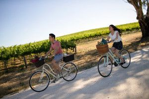 Cycle through one of the world's most popular wine brands - Barossa Valley