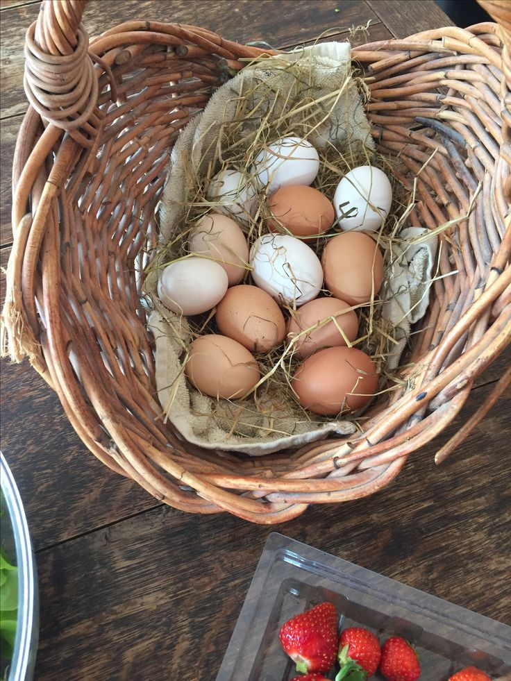 Glad to have an array of colours back in our daily egg haul! I do miss the duck eggs though - just tore the farm to shreds - maybe again one day  #organicgardening #hollyshomegrown #keepingchickens