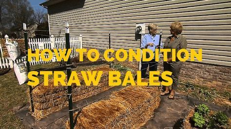 How to prep staw bales for planting in 2 weeks.  Days 1, 3 and 5:  Apply 1/2 cup of nitrogen (34-0-0) or ammonium nitrate (46-0-0) and water thoroughly.
