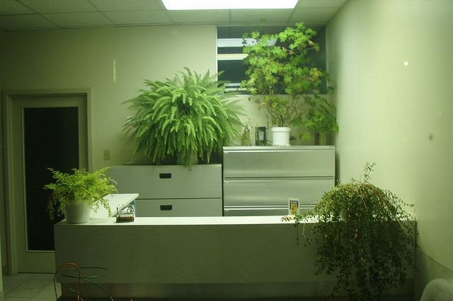 Növények a hatékony agyműködésért / Plants for the efficient cerebral function