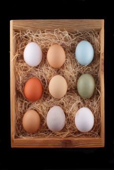 Heritage Chicken Eggs. Coloured eggs from a mix of hens for the kiddos.