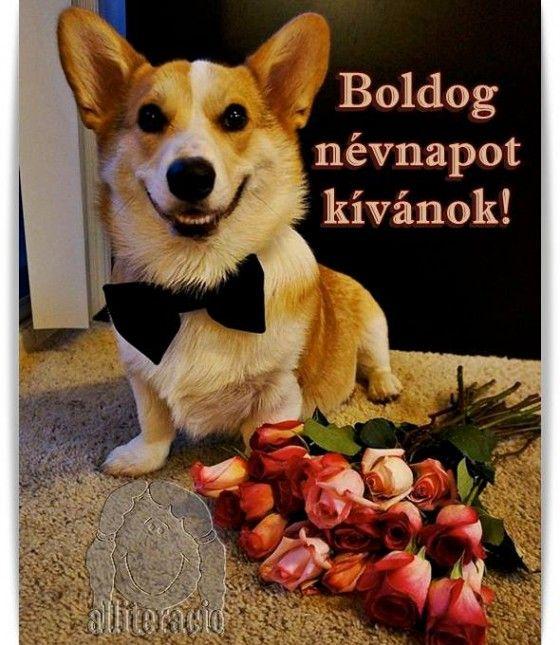 névnap, képeslap, kutya, rózsa,