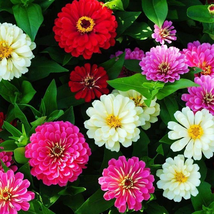 Красивые картинки живые цветы гифки калининграде