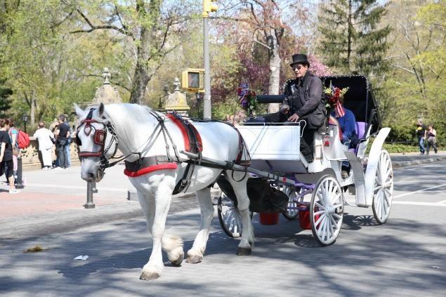 Romantic Horse drawn carriage ride thru NYC