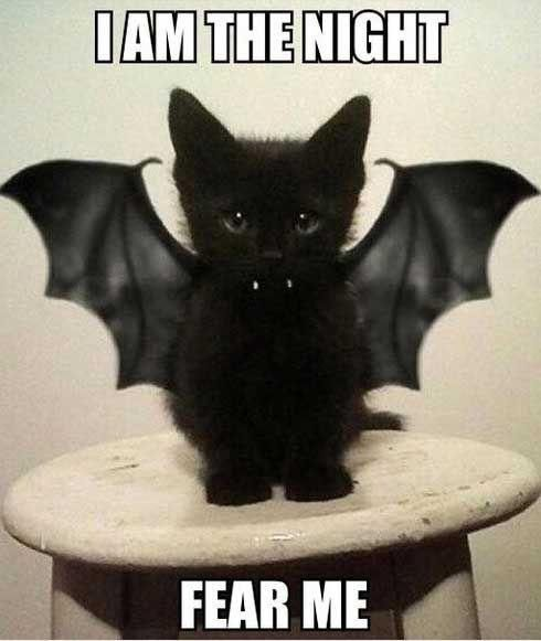 5 Halloween Memes to Get You Excited About Halloween