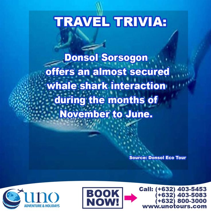 Donsol Sorsogon is one of the few places in the world that can offer an almost secured whale shark interaction during the months of November to June. Book our Legazpi tour package today to experience this once in a lifetime encounter with this marine life.  #legazpitourpackage #donsolsorsogon #itsmorefuninthephilippines #travelph #unotoursph #travelagencyphilippines