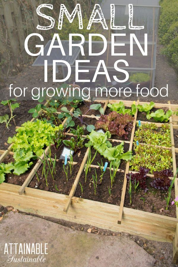 These small garden ideas will help you get the most bang for your vegetable gardening buck! You can harvest fresh produce even from your city dwelling. Urban gardens are notoriously tight on space. Adopt some of these small garden ideas and grow these productive vegetables for a bigger harvest from a small space. #garden #homestead #urbangarden via @Attainable Sustainable