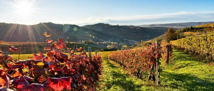 Pastas, quesos, aceites, conservas, embutidos, vinos… Especialistas en proveer al sector de la restauración de productos italianos