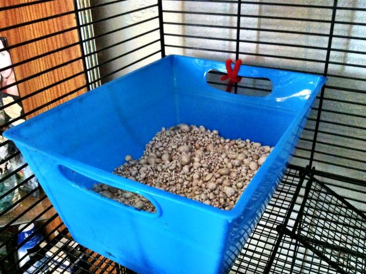 The Rat Whisperer: Litter Box Training: How to Potty Train Your Rat (Part 3 of 3)