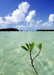 Key West, Florida - Where the REAL Fish swim!
