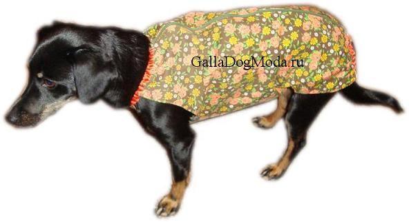 Булинда - собственная собака Галины  Черномысовой. В просторечье - Буля, Булечка
