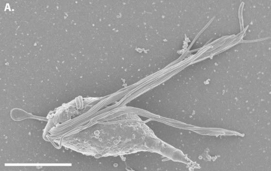 Tiny octopus-like microorganisms named after Lovecraft's Cthulhu
