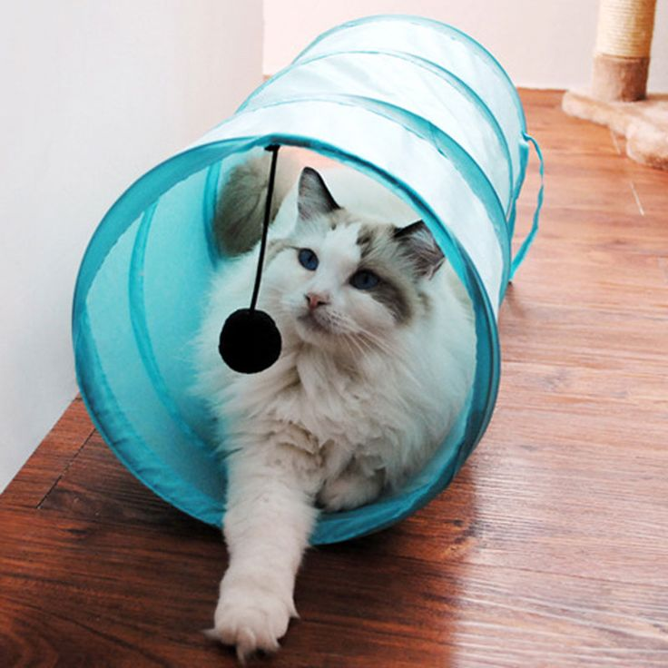 building a cat condo