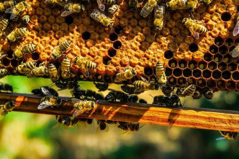 bees-honey-honeycomb