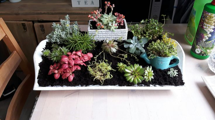 Mijn indoor tuintje