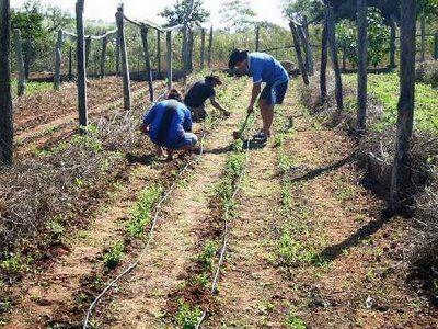 @Noudiari/ Balears contará a partir de este lunes con la primera Ley Agraria que regulará las unidades mínimas de cultivo a las que deberá adaptarse el sector rural de la Comunitat Autònoma. Así, en las Pitiüses la superficie mínima de las explotaciones de secano se establece en 1,5 hectáreas, mientras que en el caso de …